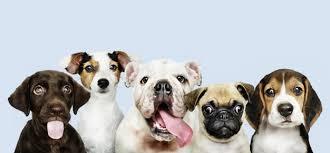 Essential CBD Extract For Pets - effets - sérum - comment utiliser