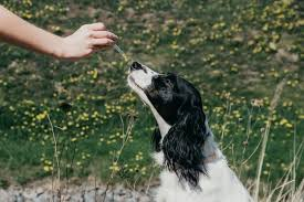 Essential CBD Extract For Pets - protection du corps - prix - pas cher - action